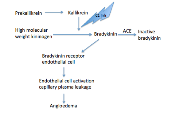 Bradykinin Mediated Pathway (Morgan 2010)