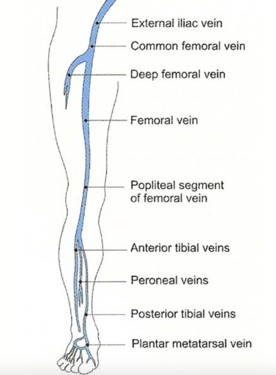 Lower Extremity Venous System (http://venacure-evlt.com/)