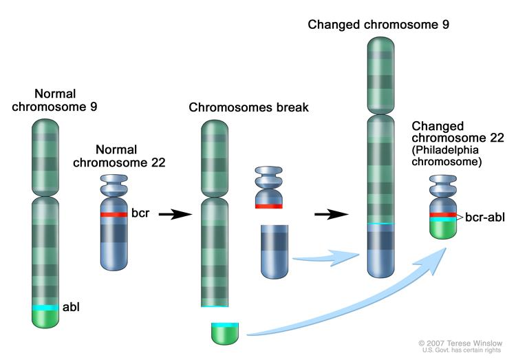 Philadelphia Chromosome (www.cancer.gov)