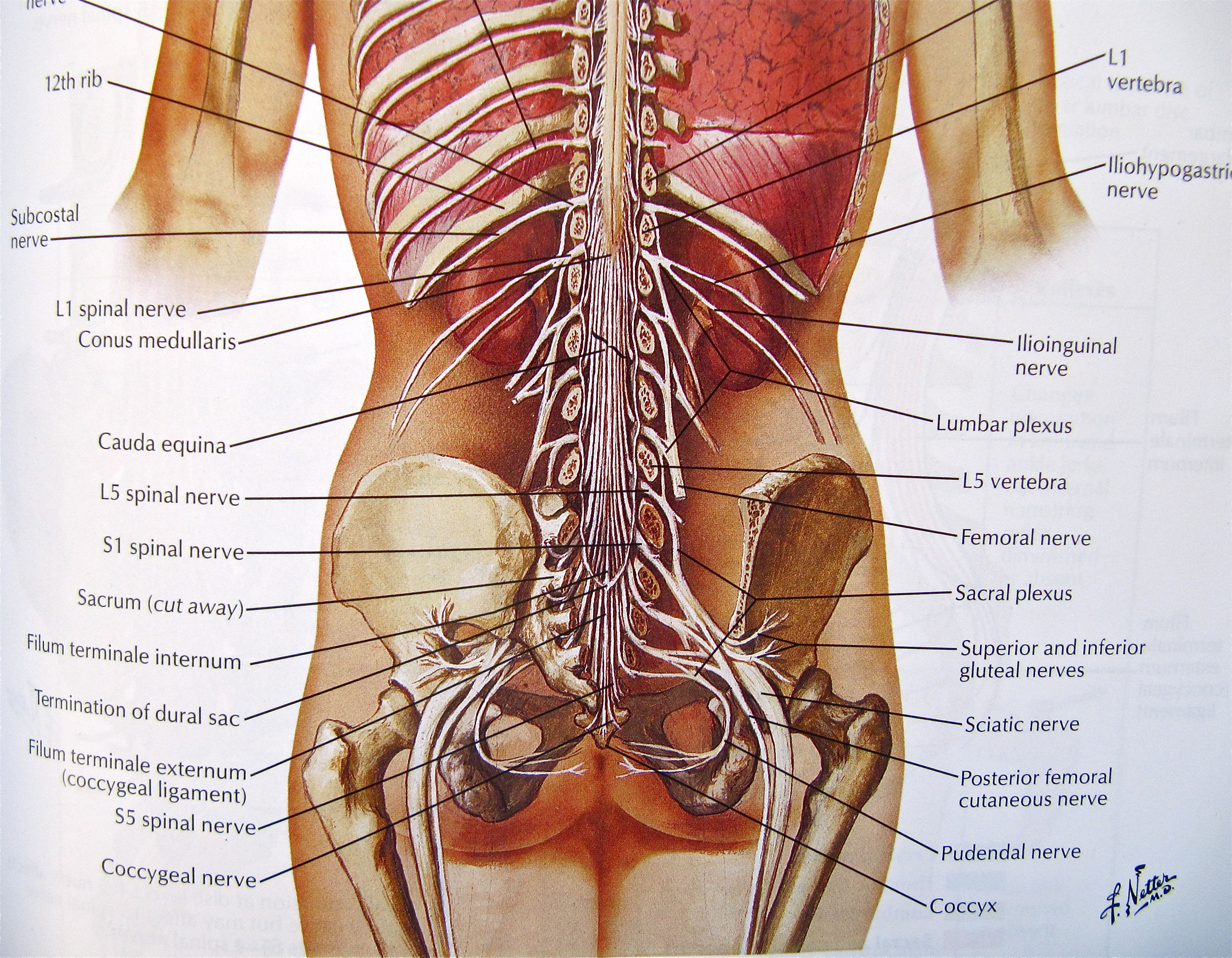 Non Traumatic Low Back Pain Core Em