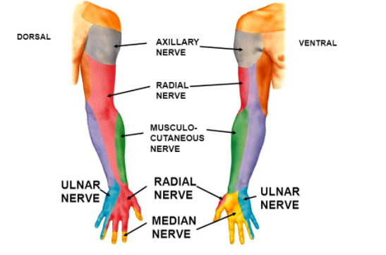Common Forearm Nerve Blocks Core Em