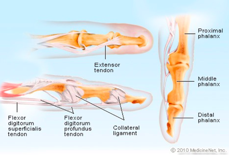 Finger Injuries Core Em
