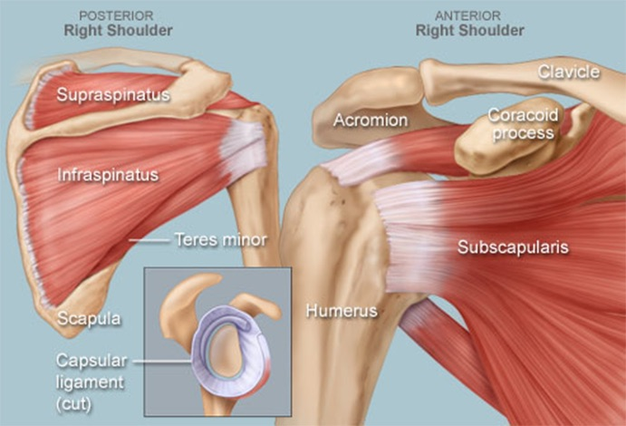 Approach to Traumatic Shoulder Pain – Core EM