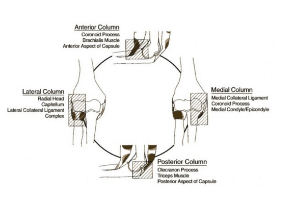 Elbow Anatomy - www.lifeinthefastlane.com