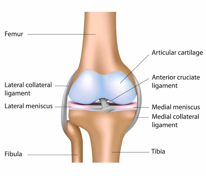 medial collateral ligament mcl injuries core em