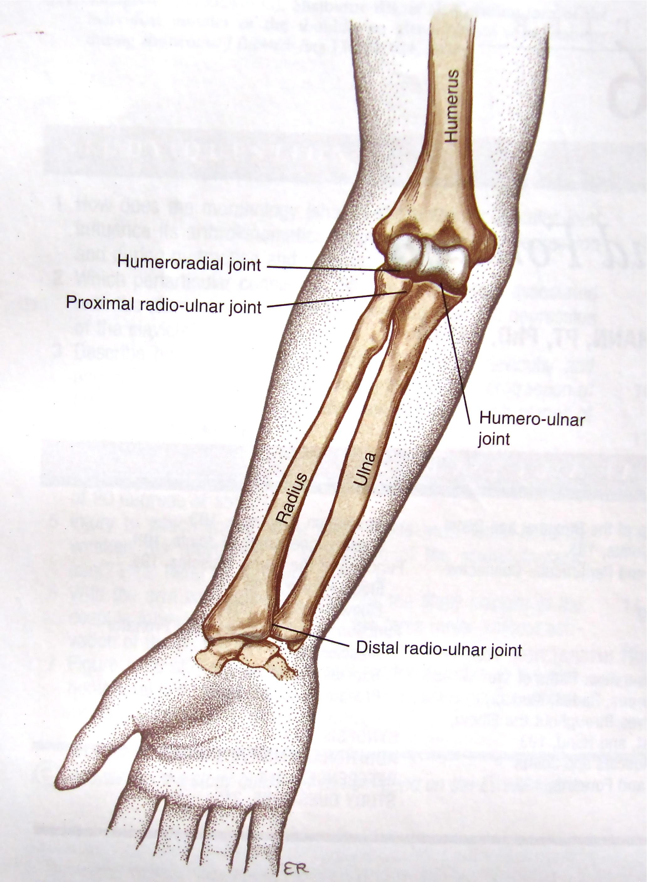 Forearm Fractures Core Em