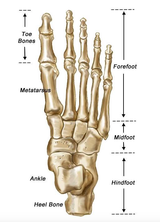 Jones Fractures Core Em