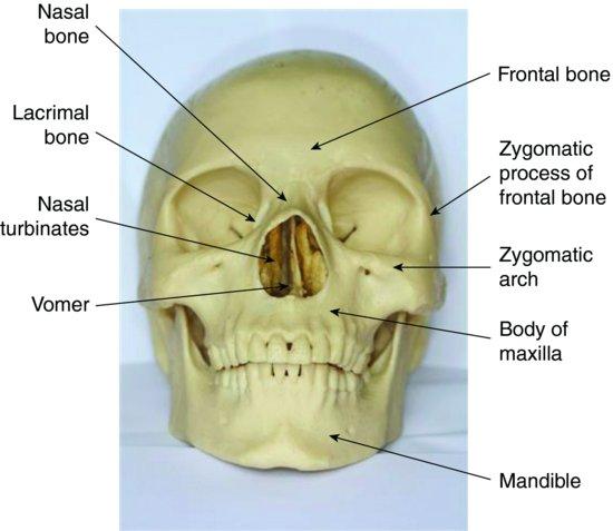 Facial Fractures Core Em