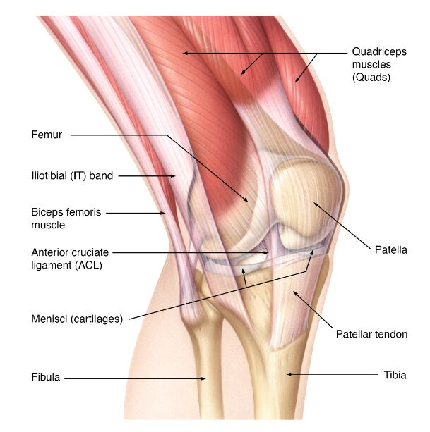 Patella Tendon Rupture Core Em